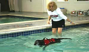 Photo of pool facilities at Canine Fitness Center